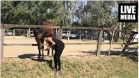 Μαθαίνοντας για τα Άλογα ...στον Ιππικό Όμιλο Βορείου Ελλάδος....