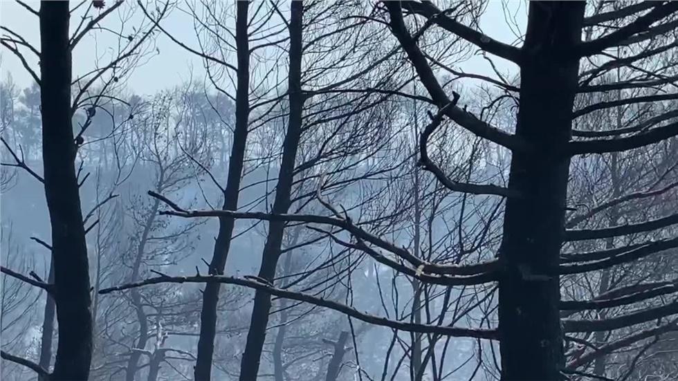 Τεράστια είναι η οικολογική καταστροφή στην κεντρική Εύβοια από...
