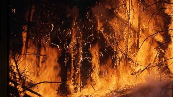 Βίντεο: Η καταστροφή στον Αμαζόνιο από ψηλά