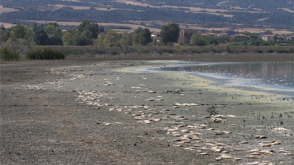 Θεσσαλονίκη: Χιλιάδες νεκρά ψάρια στην Κορώνεια