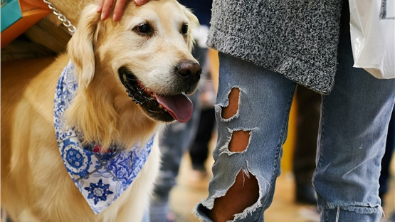 Discover Dogs 2019 - Μία έκθεση αφιερωμένη στους τετράποδους...