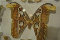 Το καμουφλάζ της πεταλούδας.