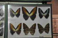 Μουσείο πεταλούδας.