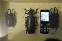 Μουσείο Πεταλούδας. Μπορείτε να αντιληφθείτε το μέγεθος τους.